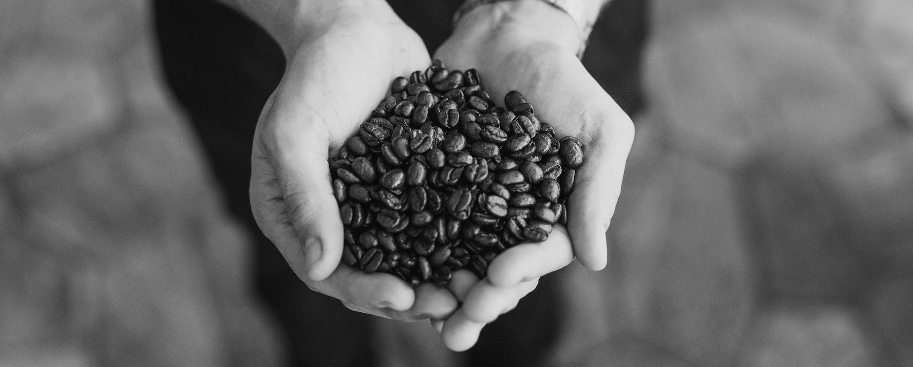 Roasted coffee beans in hands 3